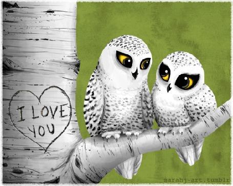 Фото Две совы сидят на березе, на которой нацарапано сердце (I love you / Я люблю тебя), автор sarahj