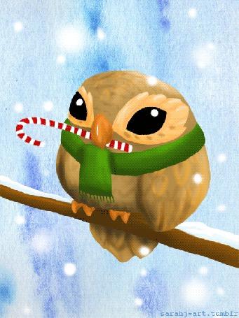 Фото Сова в зеленом шарфе и конфетой в клюве, сидит на ветке дерева под снегом, автор sarahj