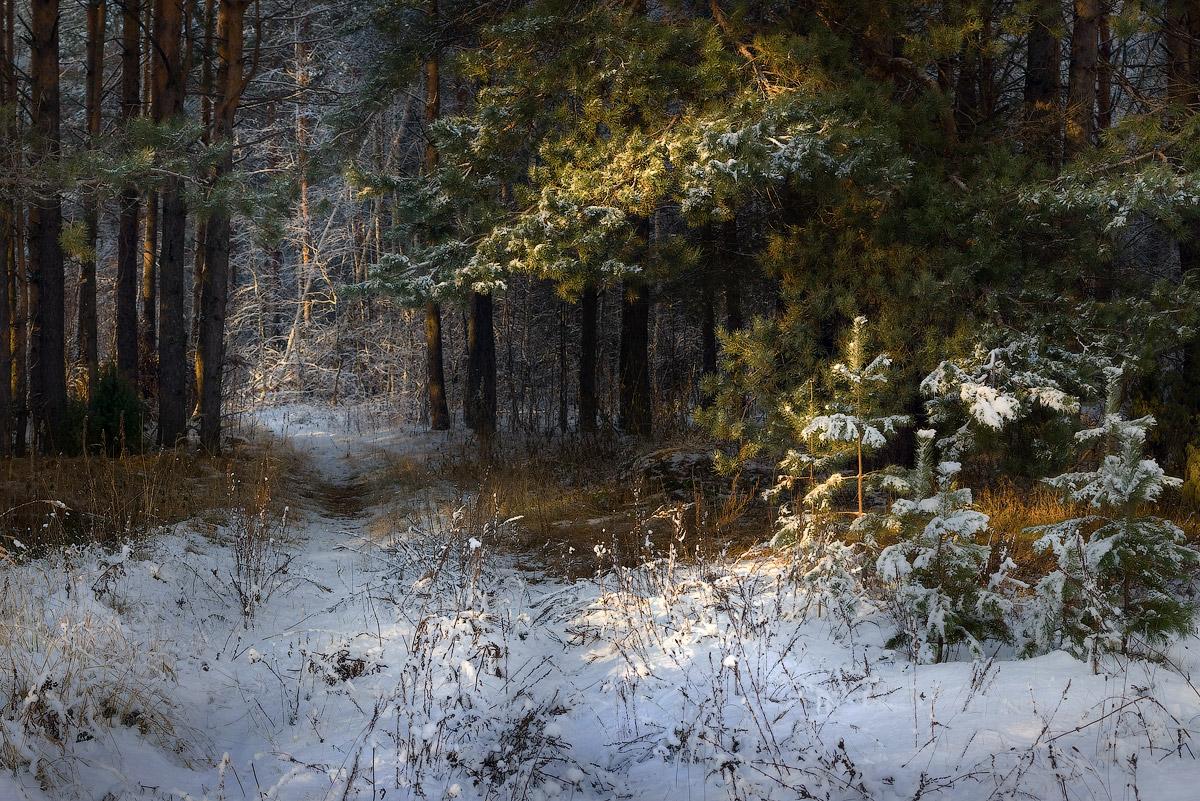 Фото зимний художественный пейзаж леса ответ