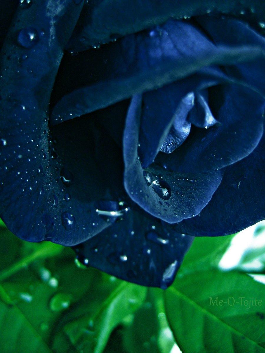картинки цветов черные и синие виде шарика