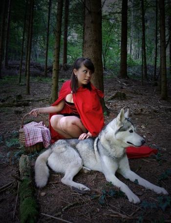 Фото Девушка в красном платье и красном плаще, с корзинкой присела в лесу под деревом, положив руку на лежащего рядом серого волка