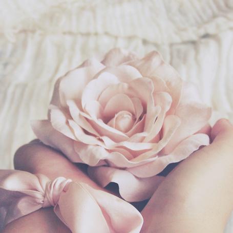 Фото Роза в женских руках, фотограф TheCameraGirl