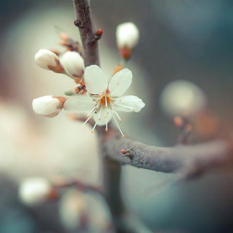 Фото Веточка цветущего дерева, фотограф Somebody-else