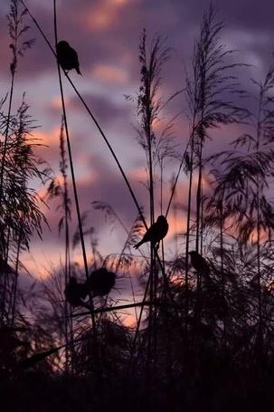 Фото Небольшие птички сидят на стеблях травы на фоне облачного неба