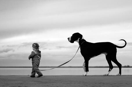Фото Маленький мальчик ведет большую собаку