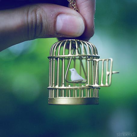 Фото Рука держит клетку с белой птицей, фотограф simoendli