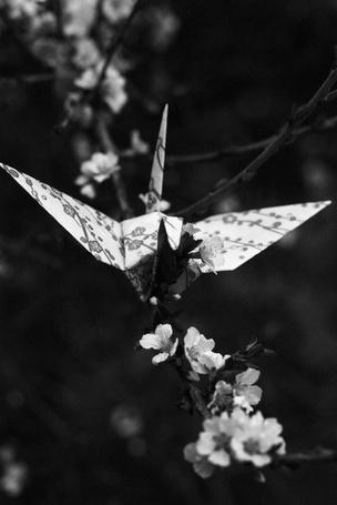 Фото Бумажного журавлика прицепили на цветущую веточку сакуры