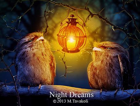 Фото Две птички сидят на ветке дерева, на верхней ветке висит горящий фонарь, работа MasoumehTavakoli (Night Dreams)