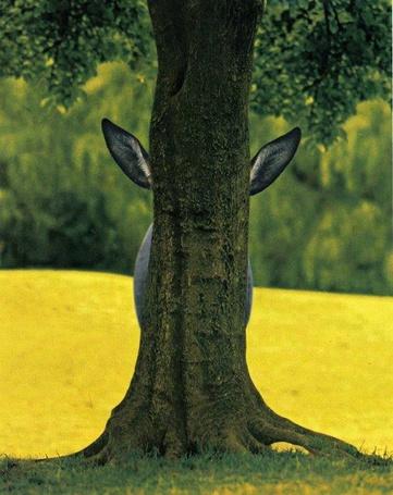 Фото Из-за ствола дерева видны уши осла