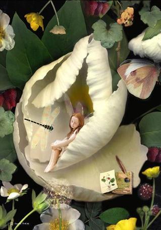 Фото К феечке, спящей в цветке подлетает стрекоза