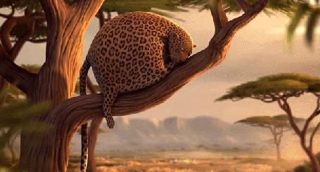 Фото Толстый леопард спит на дереве