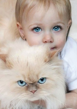 Фото Девочка с голубыми глазами держит в руках кота