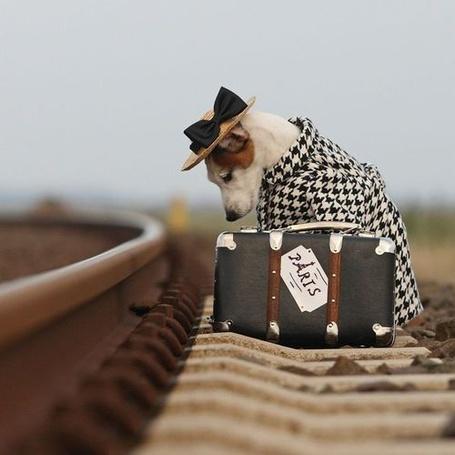 Фото Щенок в шляпе и накидке сидит у железной дороги с чемоданом (Paris / Париж) (© puzoter), добавлено: 02.04.2014 12:17