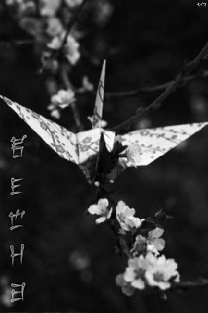 Фото Бумажный журавлик на цветущей веточке сакуры (весна)