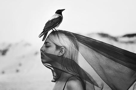 Фото Девушка в накидке, на голове сидит сорока, фотограф Jovana Rikalo