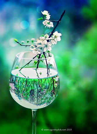 Фото Весенняя веточка в бокале с водой, by UgurDoyduk (© zmeiy), добавлено: 05.04.2014 12:08
