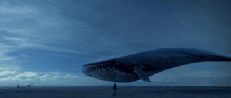 Фото Фантастический кит плавает вокруг мужчины