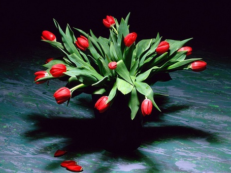 Фото Красные тюльпаны в вазе на темном фоне