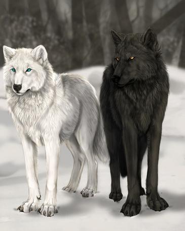 Фото воющий волк 4