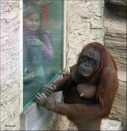 Фото Дети в зоопарке наблюдают за обезьяной, фото Akvala
