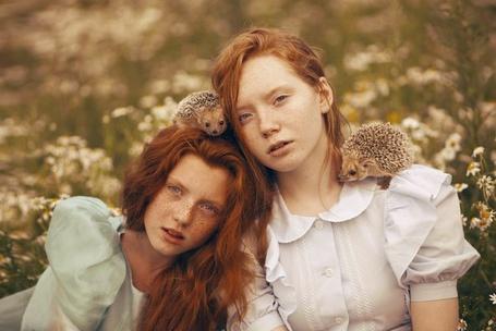 Фото Две рыжеволосые девушки в поле, на плече и голове у них сидят ежики, фотограф Екатерина Плотникова