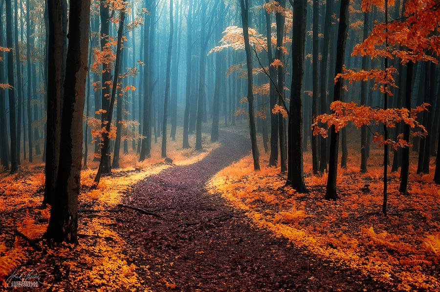 Фото Тропинка между деревьями в осеннем лесу, фотограф Janek-Sedlar