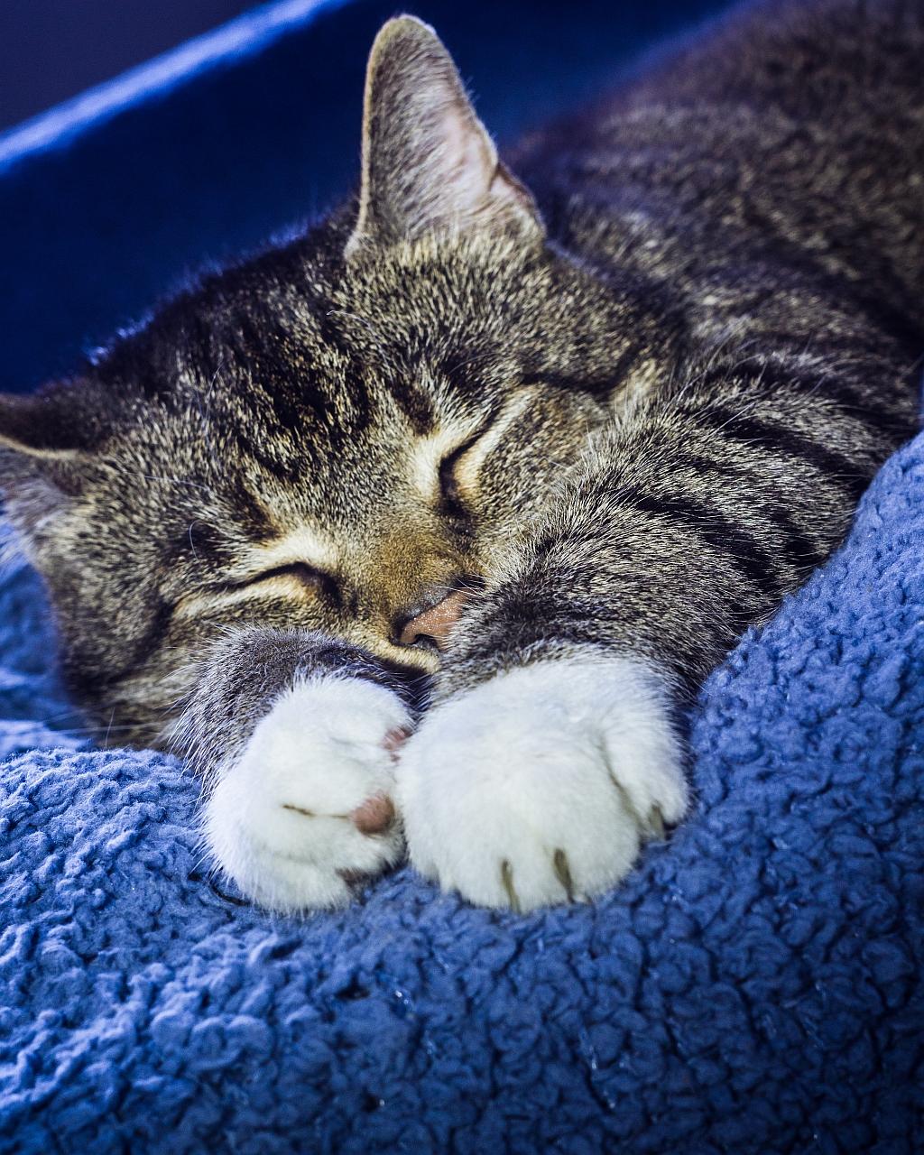 картинки спящие котята это место для