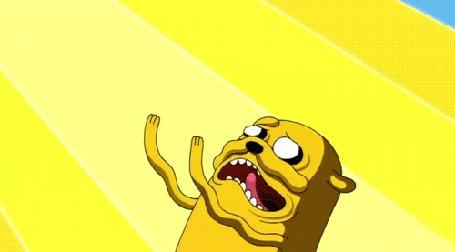 Фото Джек / Jack пес из мультсериала Adventure Time / Время Приключений