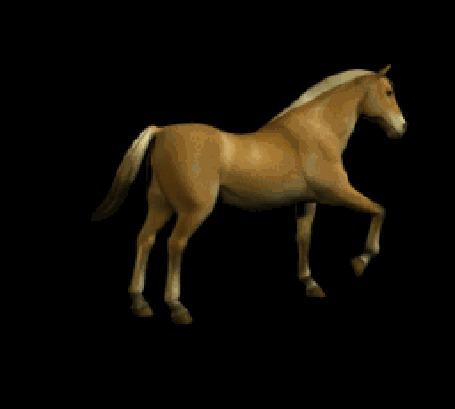 Лошадки в картинках с анимацией, написать поздравление