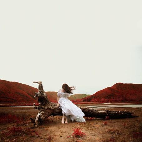 Фото Девушка в белом платье сидит на бревне, фотограф Alicia Savage