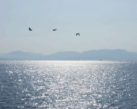 Фото Чайки над морем