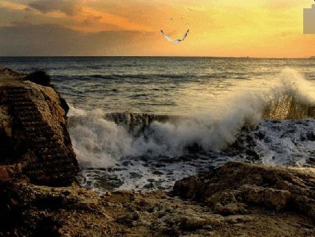 Фото На берегу моря красивая волна, над морем летит чайка