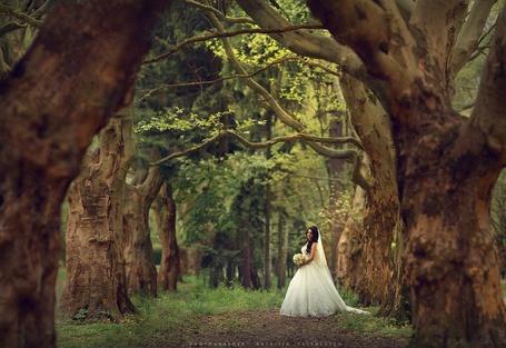 Фото Невеста в окружении деревьев, фотограф Наталя Ясиневич