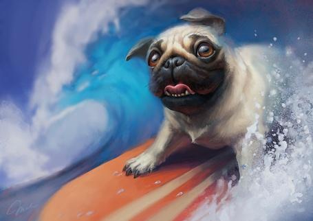 Фото Собака породы мопс рассекает морские волны на доске для серфинга