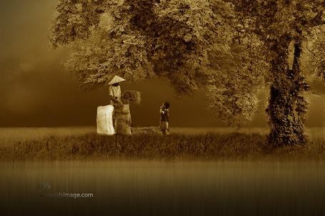 Фото Мужчина собирает сено в мешок, рядом стоит ребенок, by Idrus Arsyad