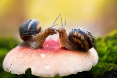 Фото Улитки приветствуют друг друга поцелуем, сидя на грибе