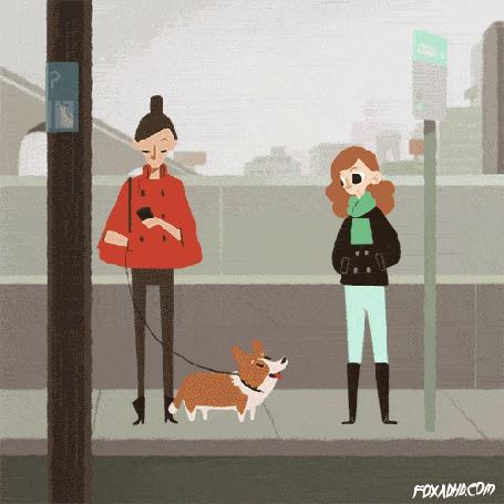 Фото Девушка украла собаку породу вельш-корги и за ней гоняться вертолеты и хозяйка пса, автор FOXADHD