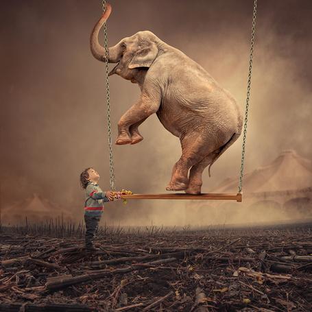 Фото Девочка, смотрит на слона, находящегося на качелях, привязанных к небу металлическими цепями, автор Garas Ionut