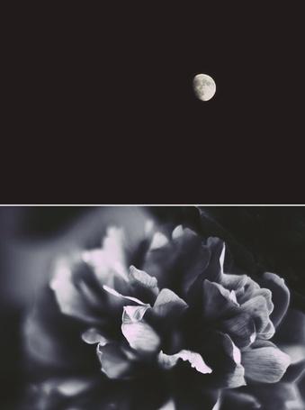 Фото Коллаж луна и цветок