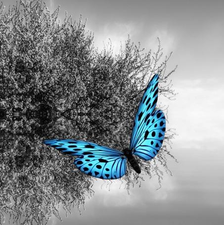 Фото Голубая бабочка на фоне весеннего дерева