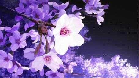 Фото Веточка сакуры раскачивается на ветру