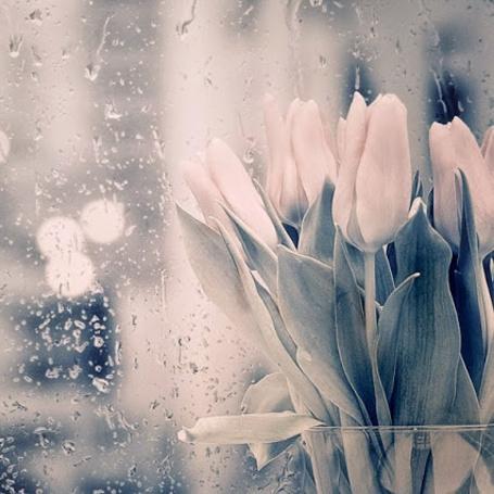 Фото Тюльпаны в вазе возле мокрого стекла