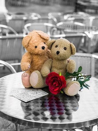 Фото Два плюшевых медвежонка, письмо и красная роза на столике кафе, фото из коллекции Город-женщина. и Город Любви. Фотограф Assaf Frank