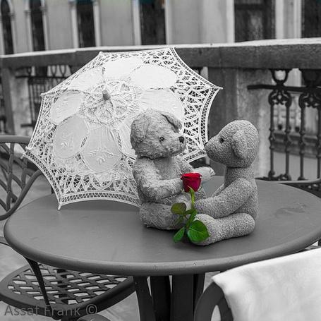 Фото Два плюшевых медвежонка с розой под белым зонтиком на столике кафе, фото из коллекции Город-женщина. и Город Любви. Фотограф Assaf Frank