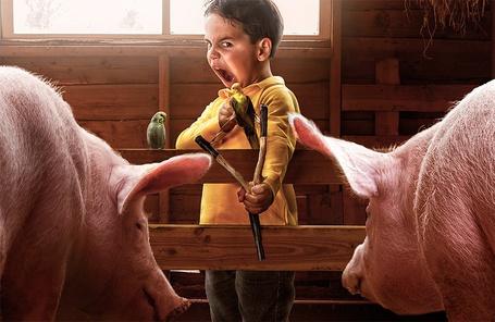Фото Мальчик из рогатки хочет выстрелить волнистым попугаем, рядом с ним две свиньи, by Adrian Sommeling