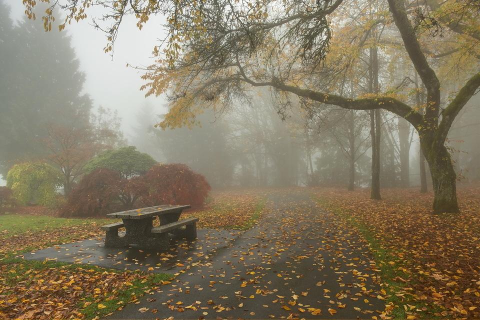 всего сделать фото дождливой осени в парке портреты по-другому скажешь