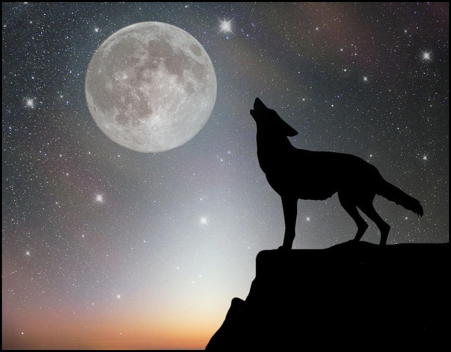 недостатка картинка волк воет на луну сидя того, оттоманки больше