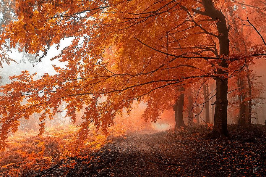 Фото Осенняя дорога, усыпанная желтыми листьями, фотограф Janek Sedlar / Янек Седлар