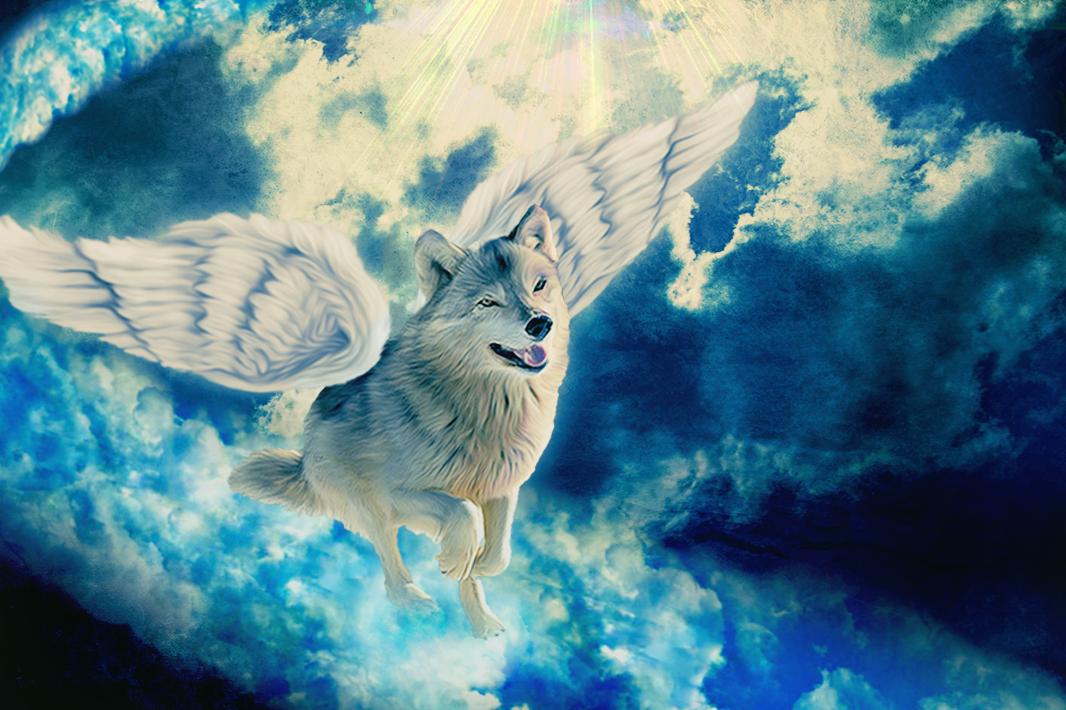 Волк воздуха картинки