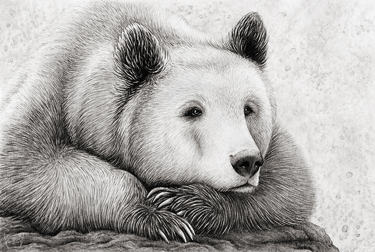 Фото медведя картинка нарисованная